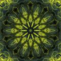 Succulent Mandala by Yulia Kazansky