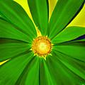 Green Flower by David Lee Thompson