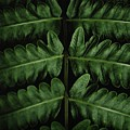Green Foilage Of Indonesia by Billy Soden