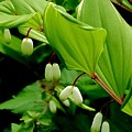 Green Foliage Canopy   by Beth Akerman