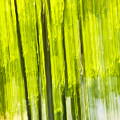 Green Forest Abstract by Elena Elisseeva