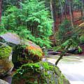 Green Forest by Thomas R Fletcher