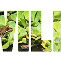 Green Frog In A Wetland by Mariusz Prusaczyk