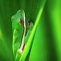 Green Frog In Vegetation by Brad Boland