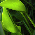 Green Grace by Herb Paynter