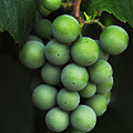 Green Grapes by Marion McCristall