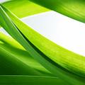 Green Grass Background by Michal Bednarek