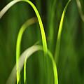 Green Grass by Christina Rollo