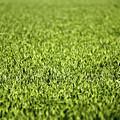 Green Grass by Dan Radi