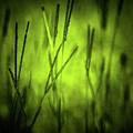 Green Grass Grow Glow by Kim Henderson