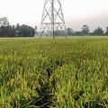 Green Grass by Saikat Das
