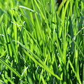 Green Grass by JoJo Photography
