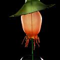 Green Hat by Jaroslaw Blaminsky