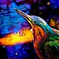 Green Heron In Dramatic Hues by Barbara Wallace