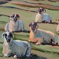 Green Hill Sheep At Rest by Donna Tuten