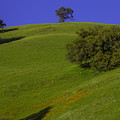 Green Hill With Poppies by Garry Gay