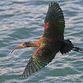 Green Ibis 6 by Shoal Hollingsworth