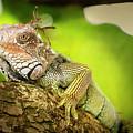 Green Iguana Costa Rica II by Joan Carroll