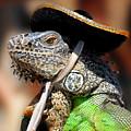 Green Iguana by Craig Incardone