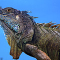 Green Iguana by Javier Flores