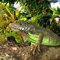 Green Iguana by Sergey Lukashin