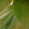 Green In Vein by Trish Hale