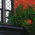 Green Ivy Garnet Brick by RC DeWinter