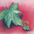 Green Ivy Leaves On Red by MM Anderson