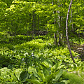 Green Landscape Of Summer Foliage by Mother Nature