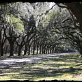 Green Lane With Live Oaks - Black Framing by Carol Groenen