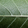 Green Leaf Geometry by Ryan Kelly