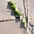 Green Leaf On Beach by Laura Ogrodnik