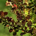 Green Leaf Spotlight by Jerry Sodorff