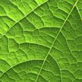 Green Leaf Structure by Aidan Moran