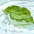 Green Leaf With Water Reflection by Sandra Cunningham