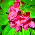 Green Leafs Of Pink by Jost Houk