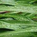 Green Leaves by Valerie Ornstein