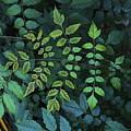Green Leaves by Viktor Savchenko