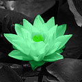 Green Lily Blossom by Shane Bechler