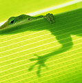 Green Lizard by Bill Brennan - Printscapes