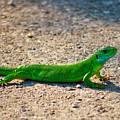 Green Lizard by Ivan Slosar