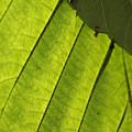 Green by Masami Iida