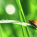 Green by Mircea Costina Photography