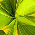 Green Mosaic by Ian  MacDonald