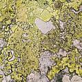Green Moss On Rock Pattern by Pati Photography