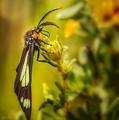 Green Moth In The Green Meadow by Rikk Flohr