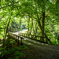Green Nature Bridge by Bryant Coffey