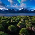 Green Night by Tor-Ivar Naess