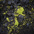 Green On Black On Iceland's Fimmvorduhals Trail by Alex Blondeau