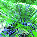 Green Palm by Laura Greco